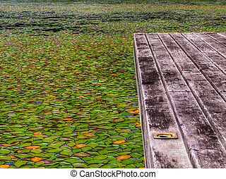 Lily Pads on the water