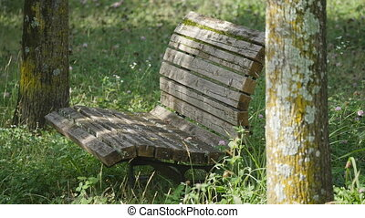 an old wooden bench with Trifolium pratense - This old bench...