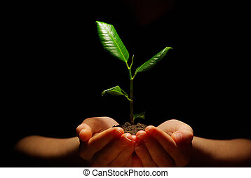 pland in hands - Hands holding sapling in soil on black