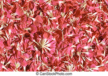 Pink petals quater - Pink petals. Usable as a background