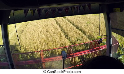 farmer driving combine harvester for harvesting wheat -...