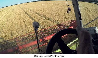 farmer driving combine harvester for harvesting wheat