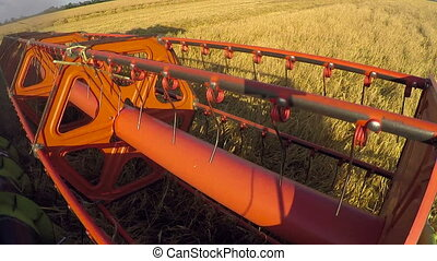 Combine harvester close up. Combine harvester harvesting...