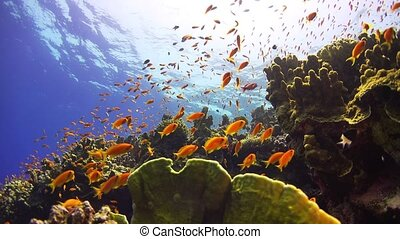 Tropical Fish on Vibrant Coral Reef, underwater static scene