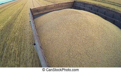 Harvest. Large truck transport grain from the field. -...