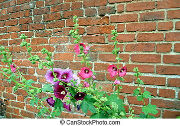 brick wall with hibiscus plants in front