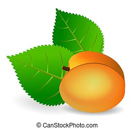 Apricot - Illustration of an apricot and two leaves.