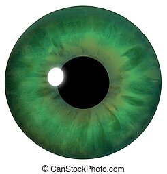 Green Eye Iris - Illustration of the iris of a green eye