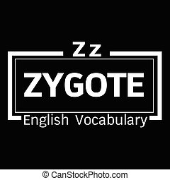 ZYGOTE english word vocabulary illustration design