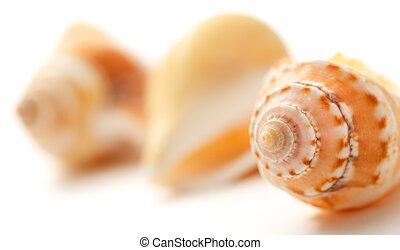 Many seashells on white background