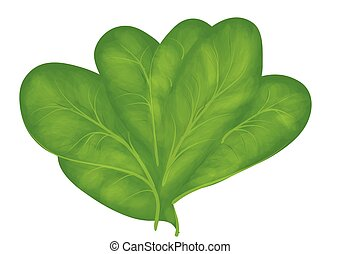 spinach isolated on white background. 10 EPS