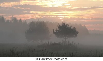 Sunrise over fields - Summer landscape with beautiful thick...