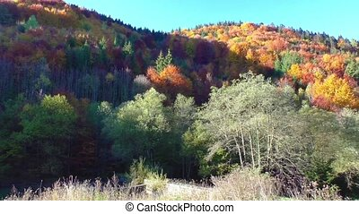 Mountain forest in morning light - Autumn colors. Mountain...