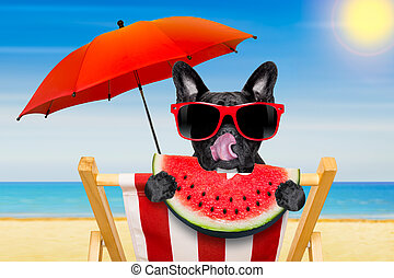 dog at the beach - french bulldog dog relaxing on a fancy...