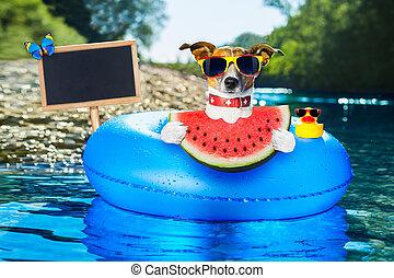 海灘, 西瓜, 狗
