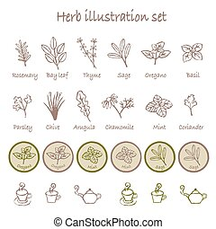 Various herb illustration set - Various herbs and tea cups...