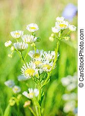 field of wild flowers in summer