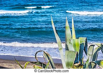 Cerdeña,  agave, mar