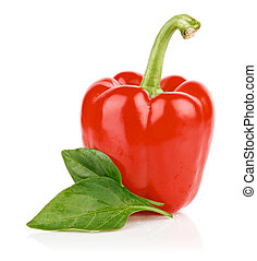 fresh single pepper fruit isolated - fresh single pepper...