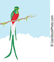 resplendent quetzal - vector illustration of a male...