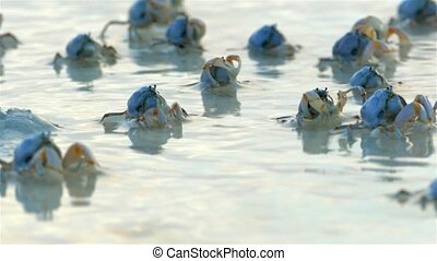 Crabs On The Beach in Sunrise Light