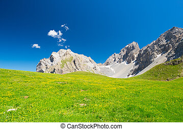 Blooming alpine meadows and high altitude rocky mountain...