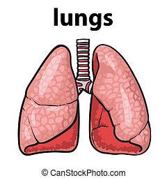 lungs of a healthy person chitsye - Sketch the lungs, sketch...