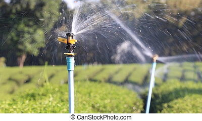 Automatic water sprinkler