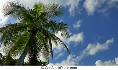 Palm Tree with Blue Sky and White Clouds