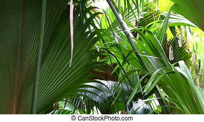 Closeup of green palm trees in the jungle of Seychelles