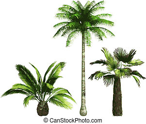 color Palms - vector