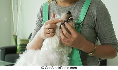 2-Woman Inspecting Teeth Dental Hygiene Of Pet Dog