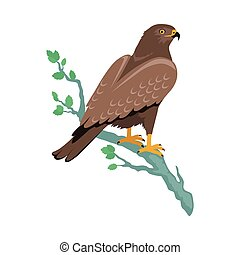 Hawk Flat Design Vector Illustration - Hawk vector Predatory...