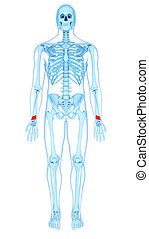 the pronator quadratus - medically accurate illustration of...