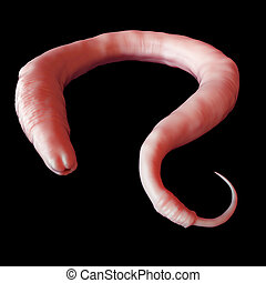 the elegans worm - medically accurate illustration of the...