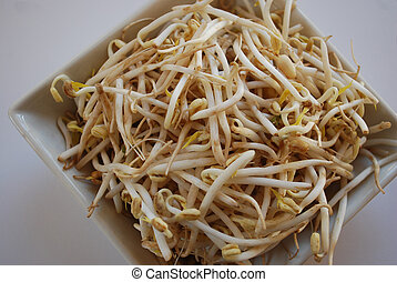 Soybean sprouts - Soybeans ready to add to salads. Soybeans...