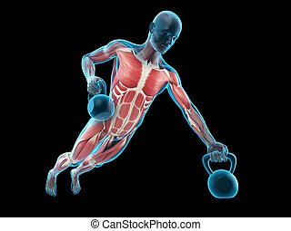 a kettle bells workout - medically accurate 3d illustration...
