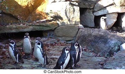 A small group of penguins on the rocks background