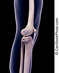 the patellar ligament - medically accurate illustration of...
