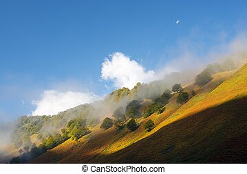 Pyrenees - Fog and trees in Aspe Valley, Pyrenees National...