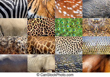 Real animals skin - Collection of many real wild animals...
