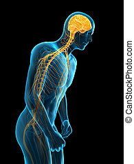 parkinson - medically accurate 3d illustration of parkinson