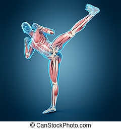 Kick boxing pose - Medically accurate 3d illustration of a...