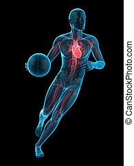 a basketball player - medically accurate 3d illustration of...