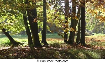 Autumn scene - Scenic view of golden leaves on trees in...