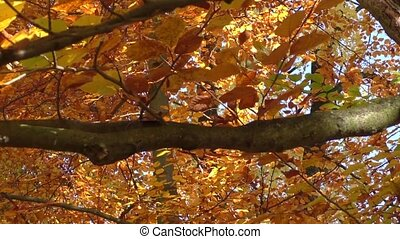 Leaves on trees in park