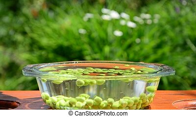 green peas spilling peas in a container poured into a bowl...