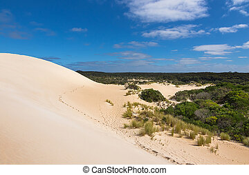 High sand hill ridge and drought tolerant plants with blue sky at Little Sahara, South Australia