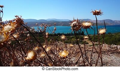 Dry Plant and Sea Landscape