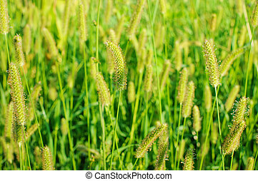 Spring or summer background with grass